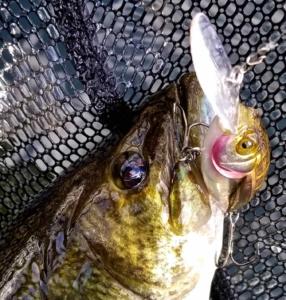 Smallmouth Bass Megabass Lure Landing Net AAA