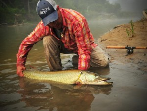 Paisley Saugeen River Musky on Inline Spinner 1