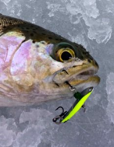 Freedom Lures Rainbow Live Action Minnow Spoon AAA