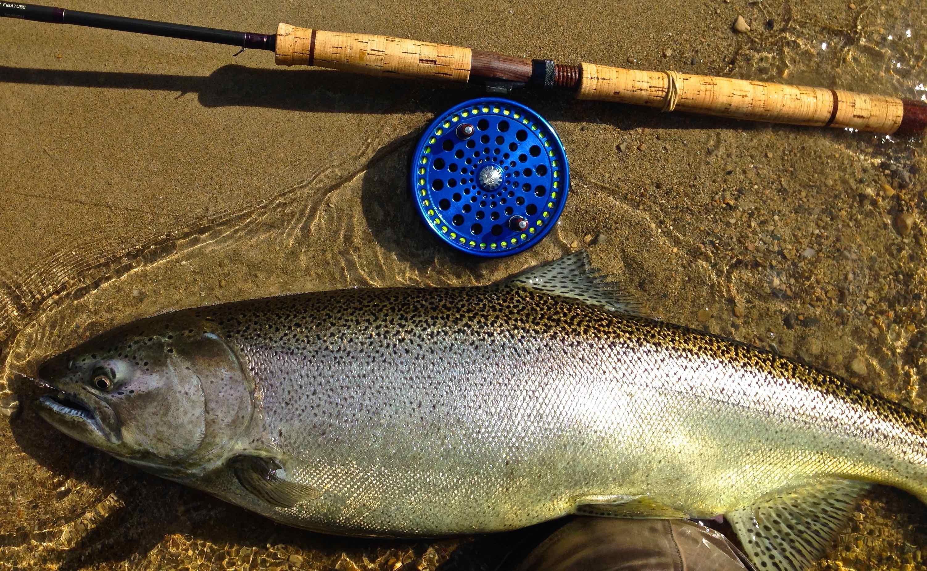 Early Lake Huron Chinook Salmon on the Centerpin Float Rod AAA
