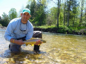 Saugeen River Upper Native Brown Trout