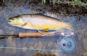 Whitemans-Creek-Brown-Trout-Orvis-Fly-Reel