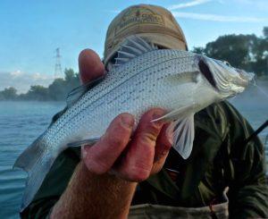Silver Bass Sarnia Style BBB