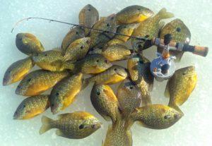 Sunfish While Ice Fishing New York State ...
