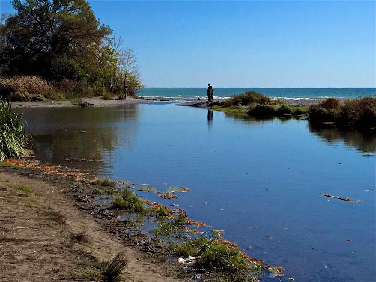 Migratory - Wilmot Creek - Clarington, Ontario
