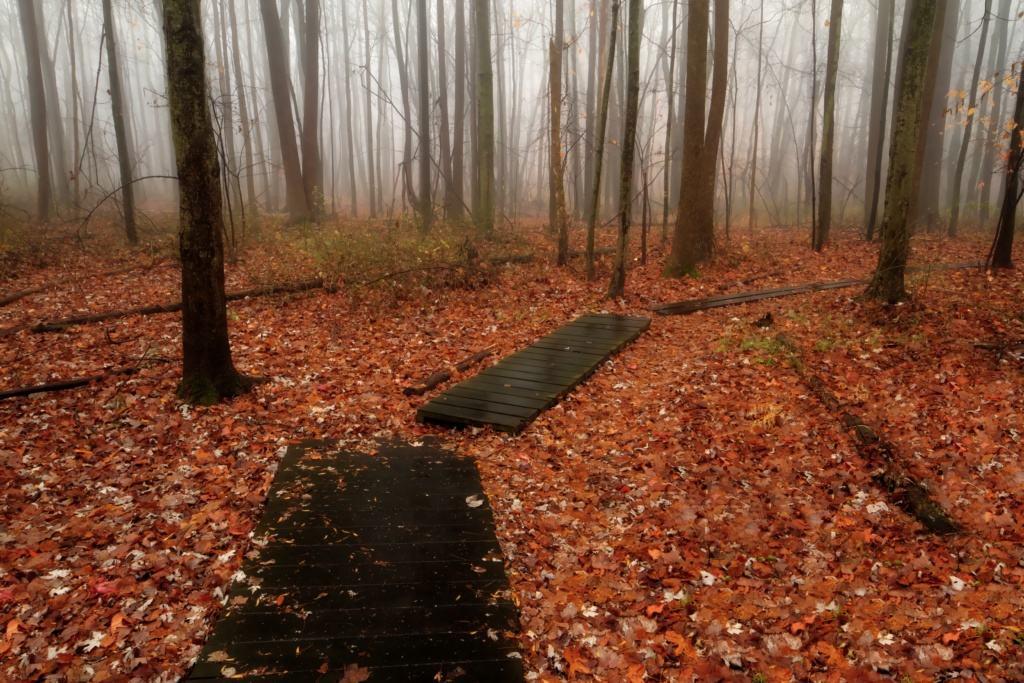 5 Mile Woods