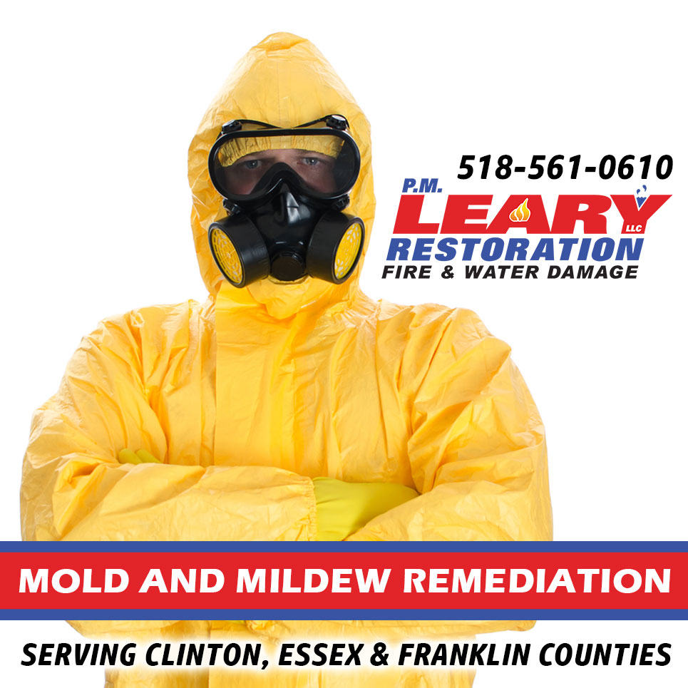 mold and mildew remediation services