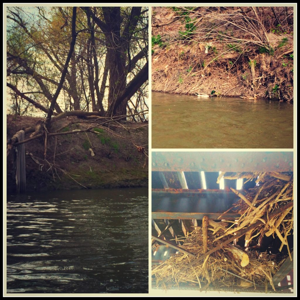 Pollution, Flooding, Erosion are all foes the Don River has to fight against