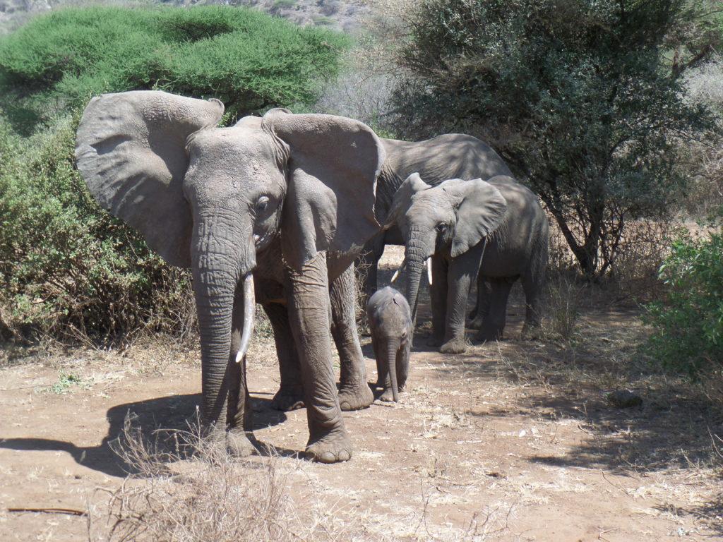 Elephants make us both very HAPPY.