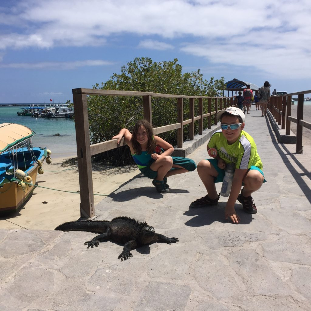 We were able to come so close to the marine iguanas that you know they have become VERY familiar with tourists