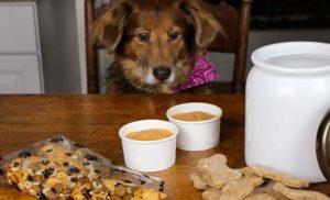 The Homemade Dog Treat
