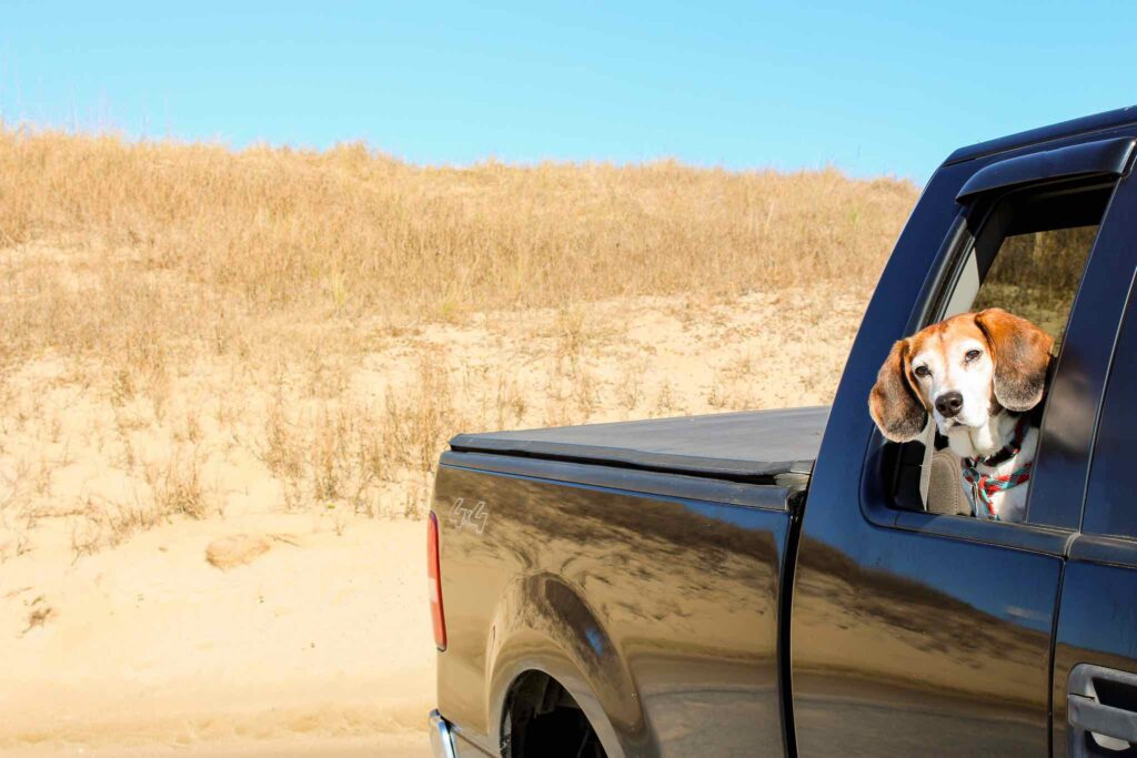 dog looking out of truck window