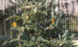 Decorate a Tree for Birds