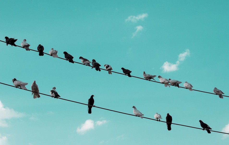 Pigeons and Resilience