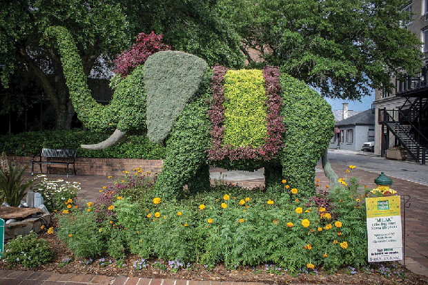 Elephant topiary at SC Festival of Flowers