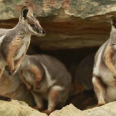 Marsupials: Progress and Prospects