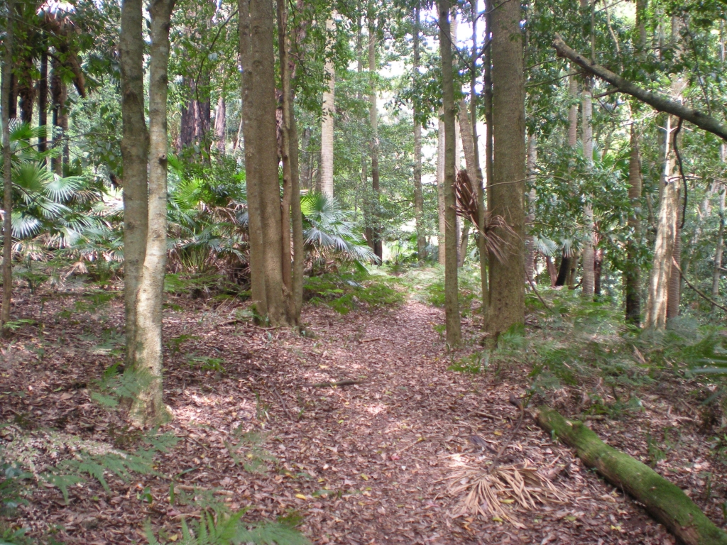 Forest Island, Royal National Park.