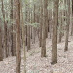 Wingello State Forest