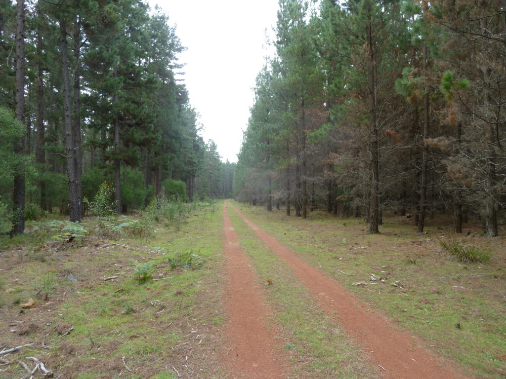 Penrose State Forest