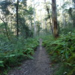 Blue Gum Swamp, Blue Mountains