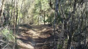 Menai (Lucas Heights) mountain trail.