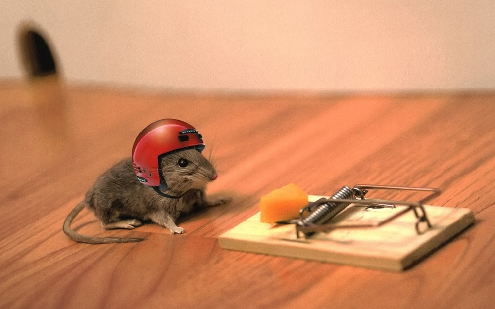 mouse risk