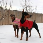 gift-ideas-dogs