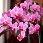 repotting-orchids