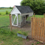 chicken-coop-part-two