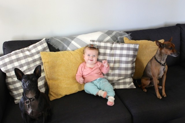 lucy-and-dogs