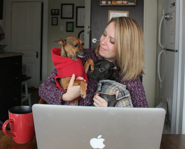 online-holiday-planner-laptop-dogs