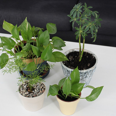 Spring Cleaning for Houseplants