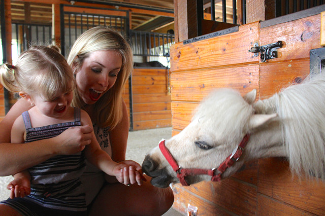 ronks-lancaster-pa-lil-country-store-horses