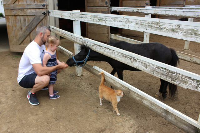 ronks-lancaster-pa-lil-country-store-mini-horses
