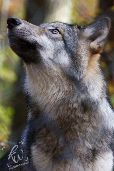 Lakota Wolf Preserve photography.