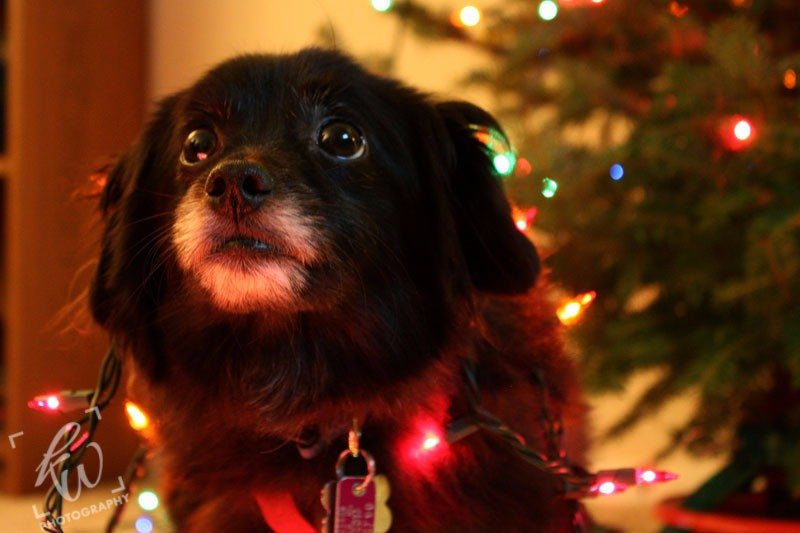 Pet Photography - a great Christmas gift idea!