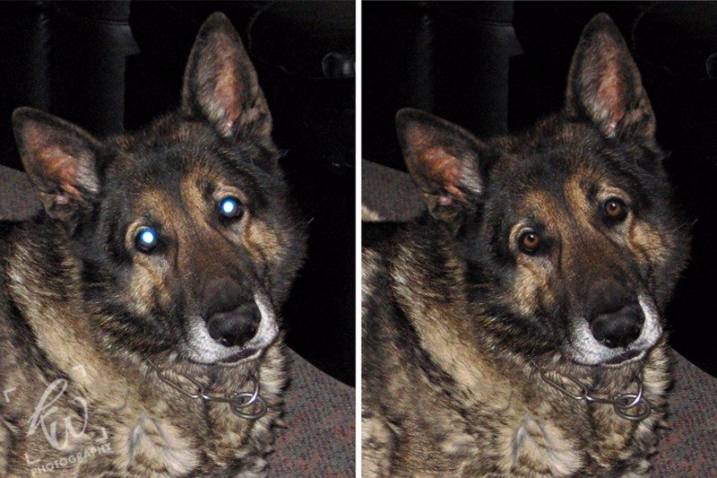 remove red eye and white eye with Photo retouching services.