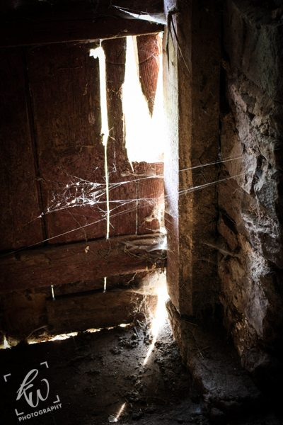 Thick spider webs stretch across a crack in an abandoned barn door.