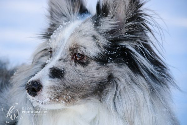 Close up of pretty Zoey in the snow.