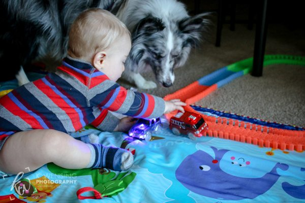 Baby and dog playing with toy cars.