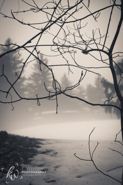 Intertwining branches against the foggy landscape behind.