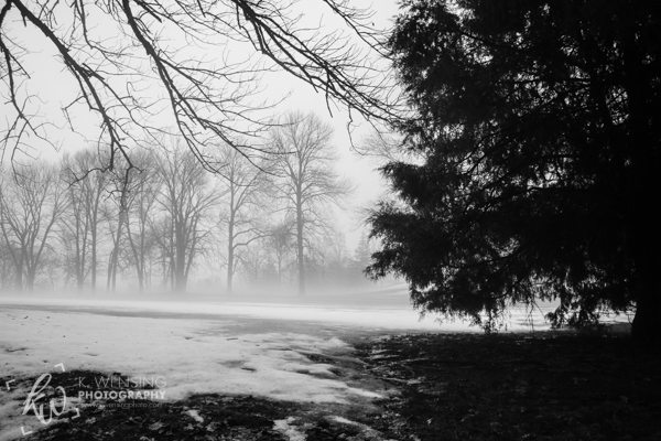 Black and white photograph of the foggy trees.