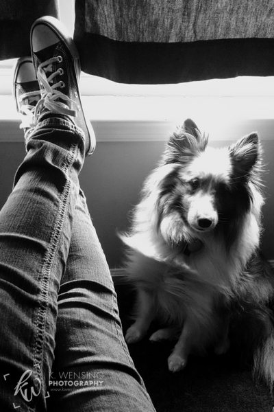 My favorite shoes and favorite sheltie.