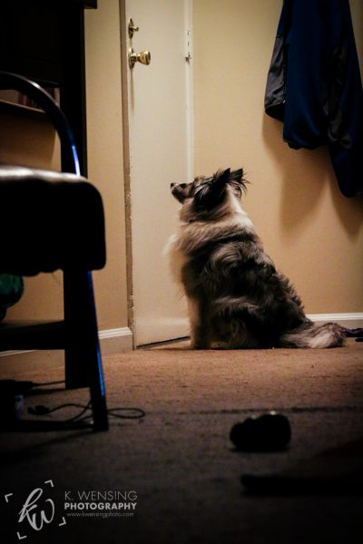 Zoey patiently waiting by the door for Daddy and Chewie to come back.