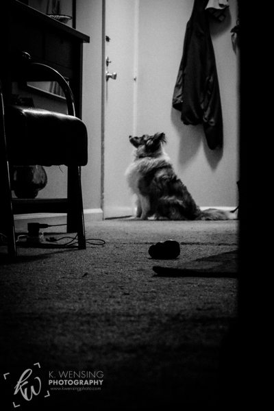 Adorable Sheltie waiting by the door.