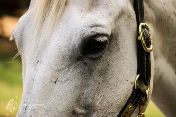 Lovely horse eyelashes!