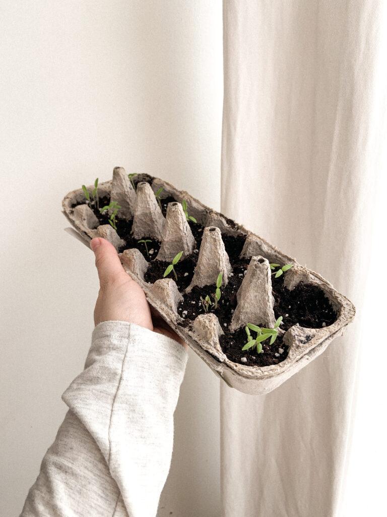 semences et semis zero dechet reutiliser contenants oeufs