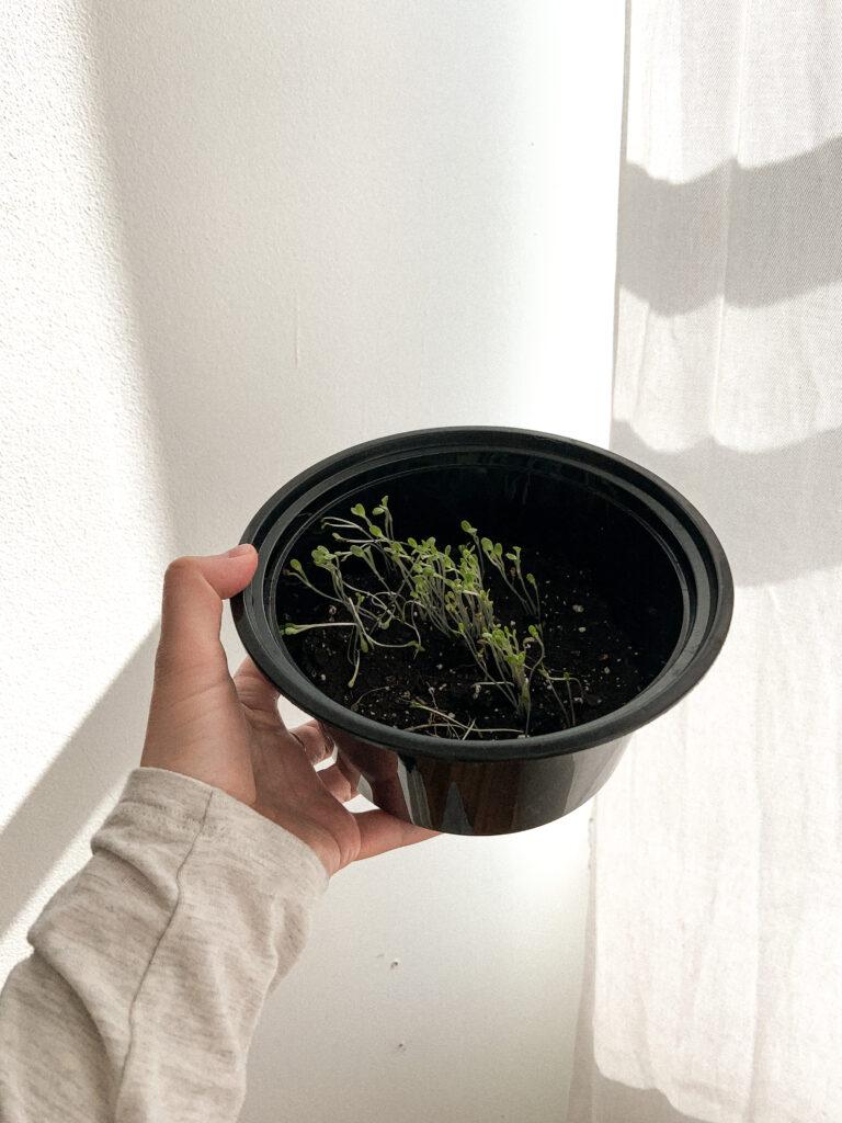 semis zéro déchet réutiliser contenants take out