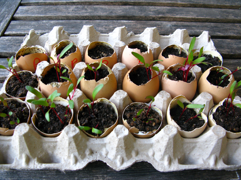 semence coquilles d'oeufs zero dechet