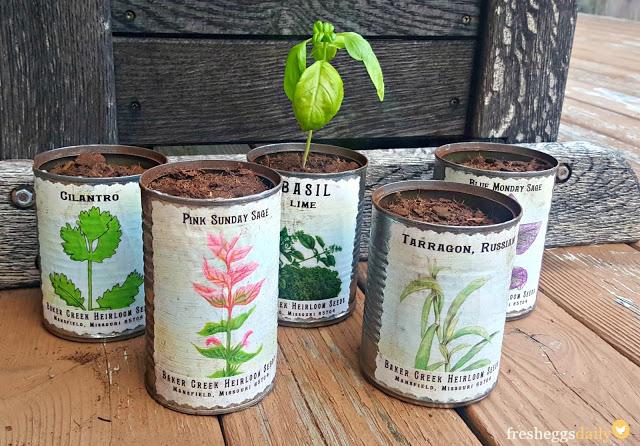 conserve zero dechet semences